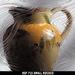 Glass Art Film, Small Rococo 46 cm x 33 cm